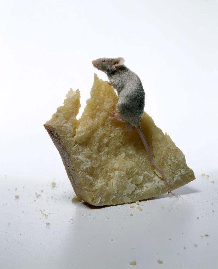 8-irving-penn-food1997